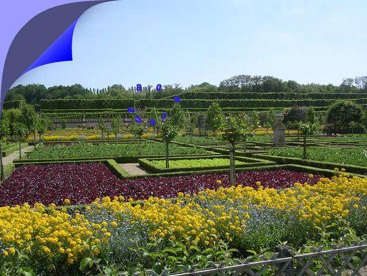 Fleurs et salades dans les jardins du château de Villandry