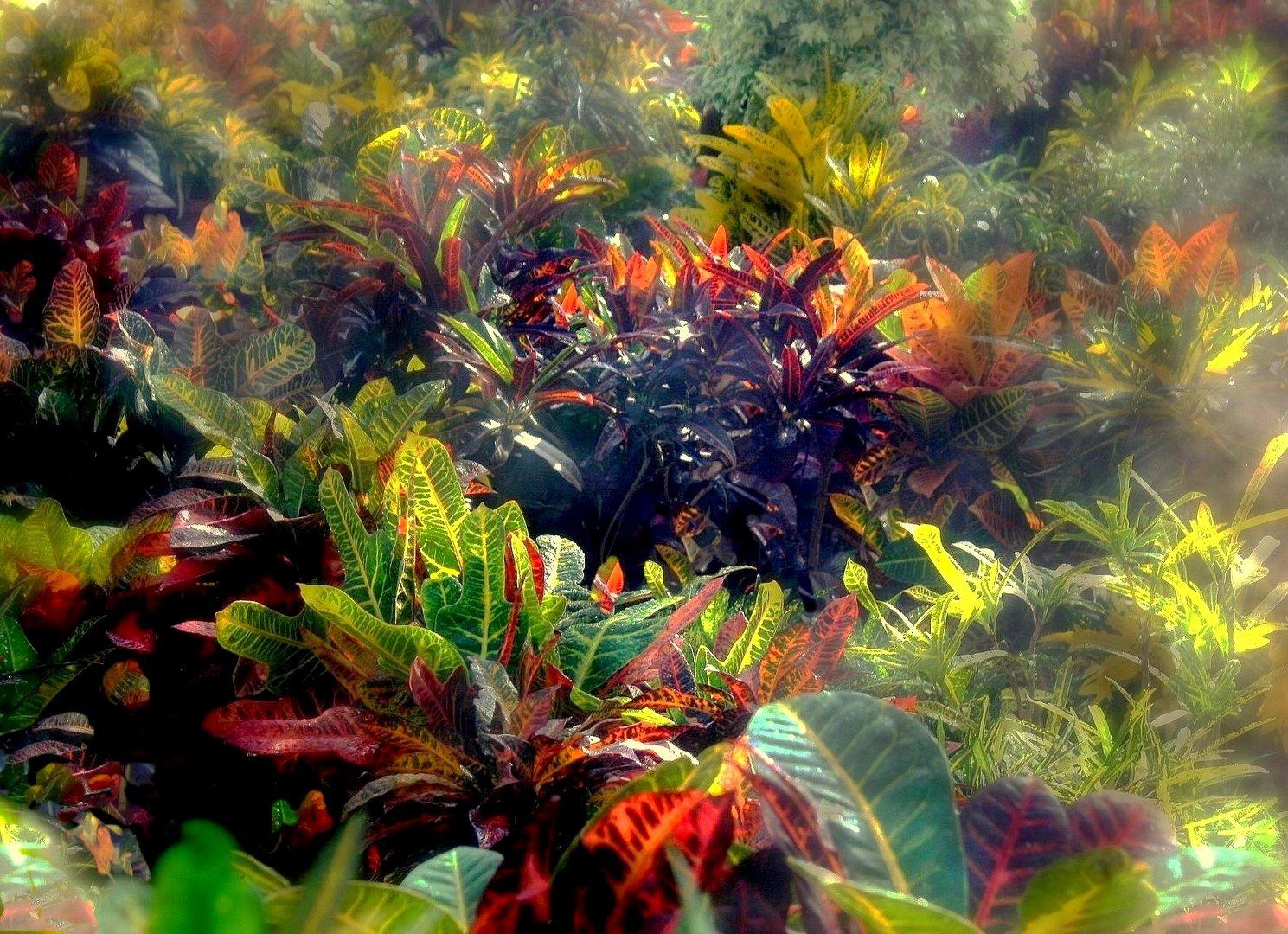 Fleurs et vapeurs