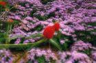 fleurs floues
