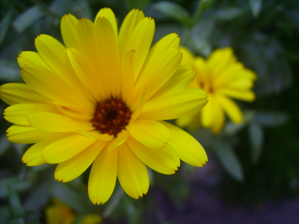 Fleurs jaunes photo et image macro nature macro fleurs for Fleurs internet