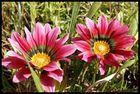 fleurs lumière