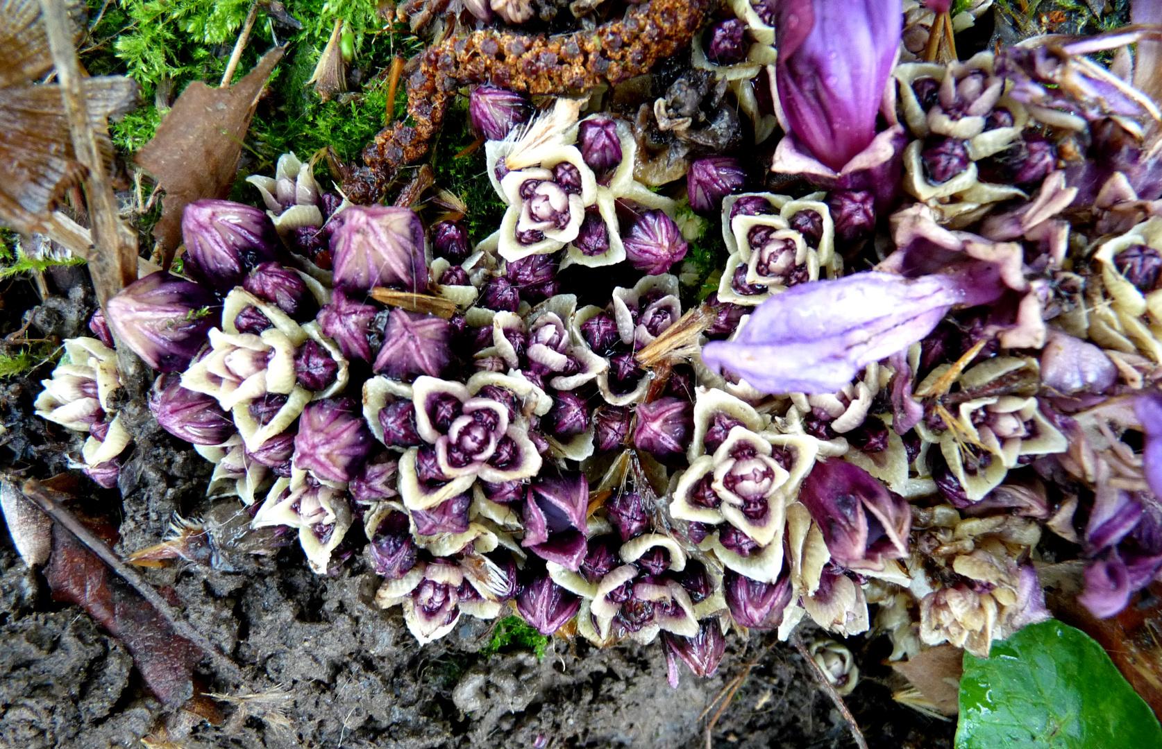 Fleurs ou champignons ?