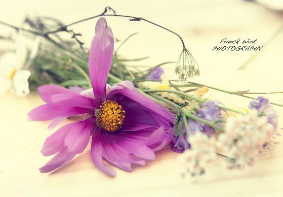 Fleurs oubliées