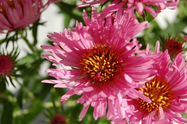 Fleurs pétillantes