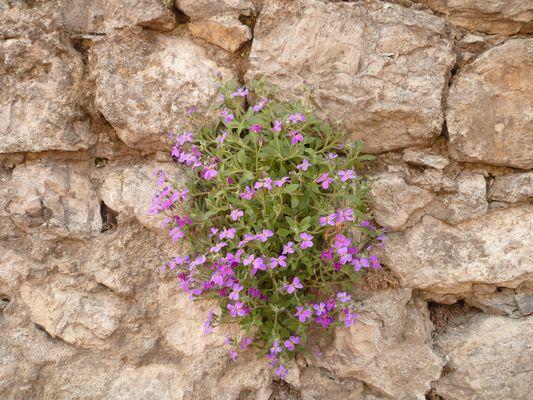 Fleurs poussant dans le mur ...