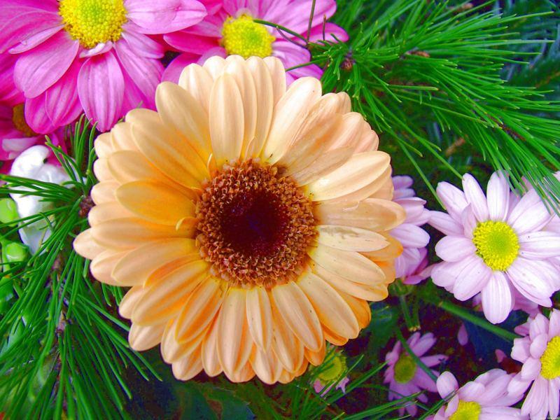 fleurs tu es belle pour un .........