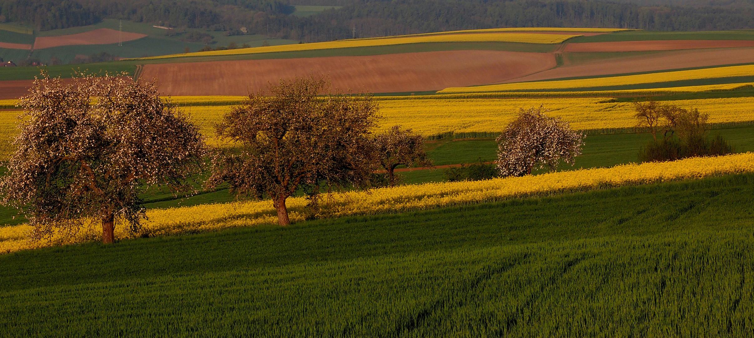 Flickerlraps und Apfelbäume