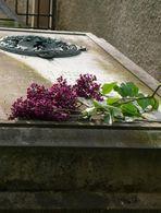 Flieder auf Bettines Grab