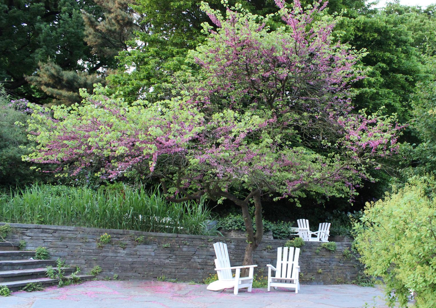 fliederbaum foto bild pflanzen pilze flechten. Black Bedroom Furniture Sets. Home Design Ideas