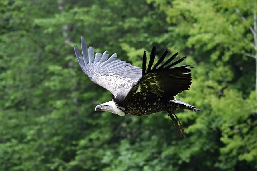 Flieg GEIER flieg :-)