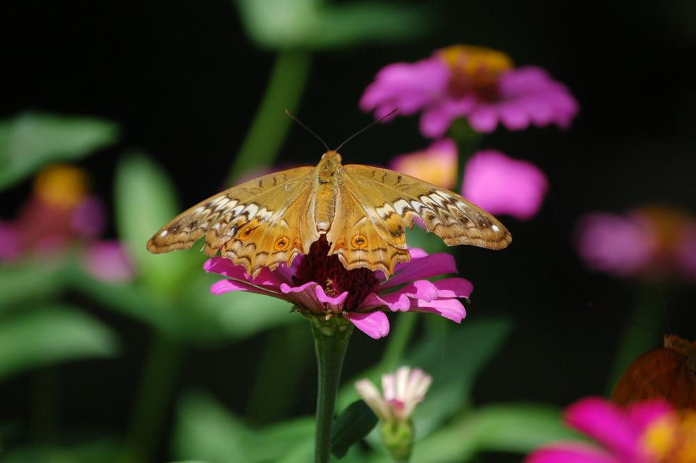 Flieg Schmetterling, flieg....