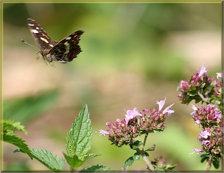 flieg weiter kleiner Schmetterling