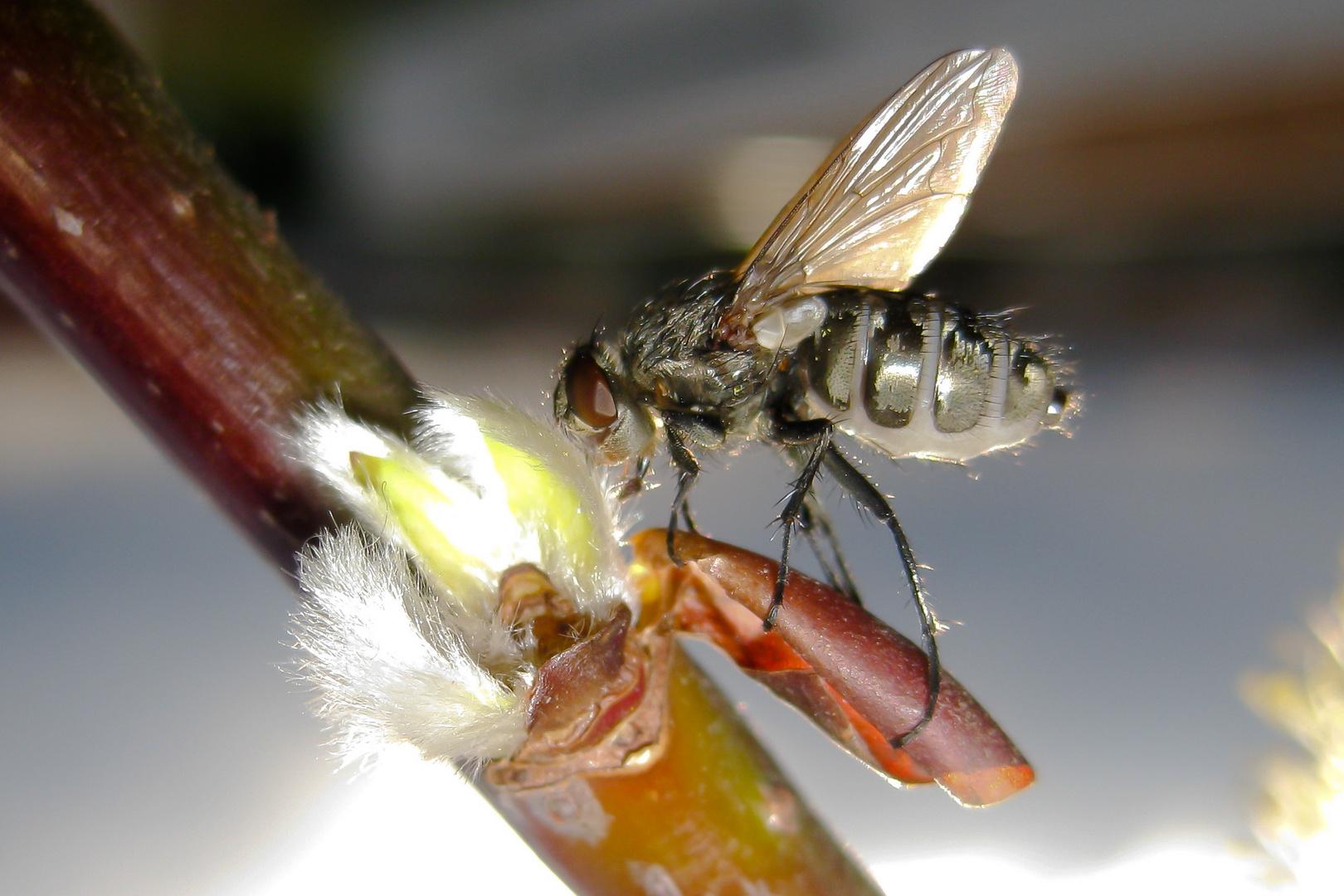>>> Fliege