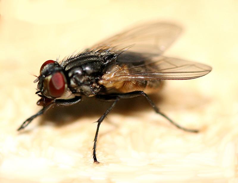 Fliege 2. Versuch