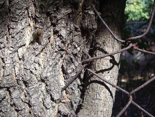 Fliege am Baum