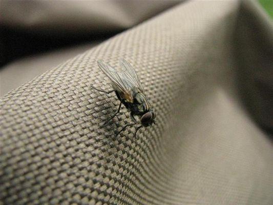 Fliege am Kinderwagen