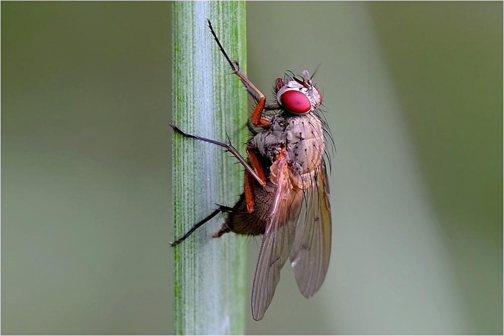 Fliege am Teich