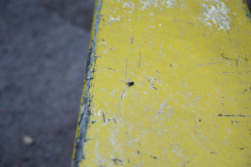 Fliege auf Bank