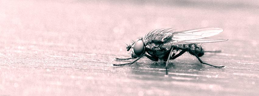 Fliege auf dem Tisch eine Fliege