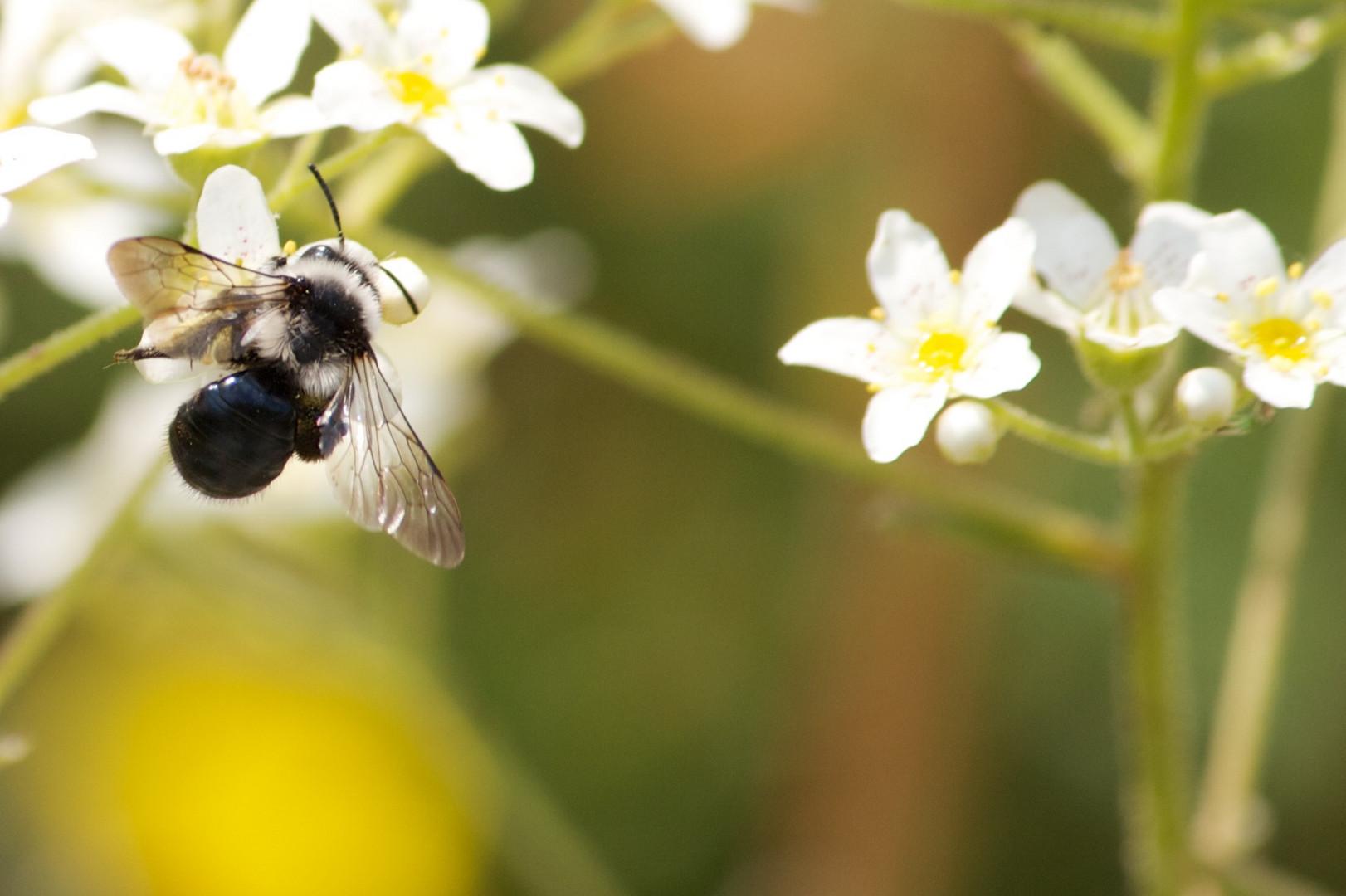 Fliege auf einer Blüte