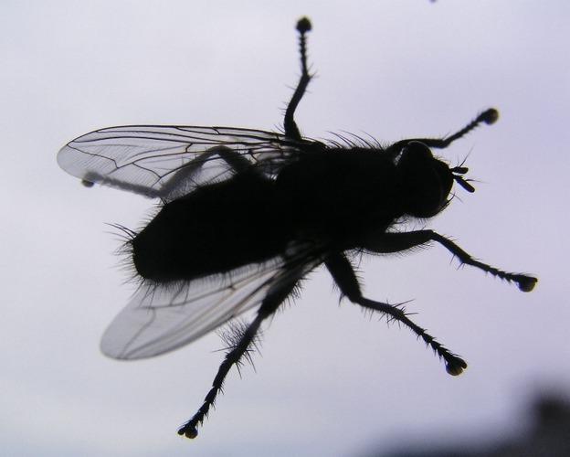 Fliege auf Glas