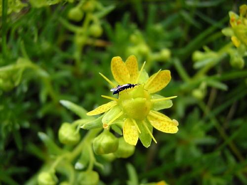 Fliege auf komischer Pflanze...