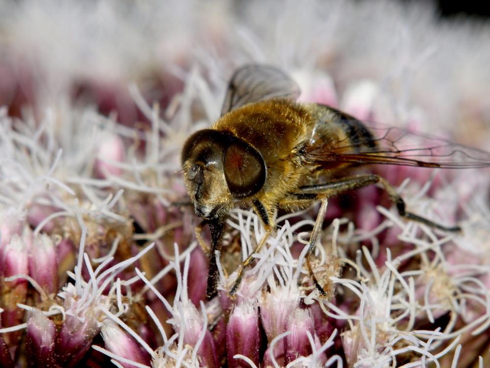 Fliege auf Lila