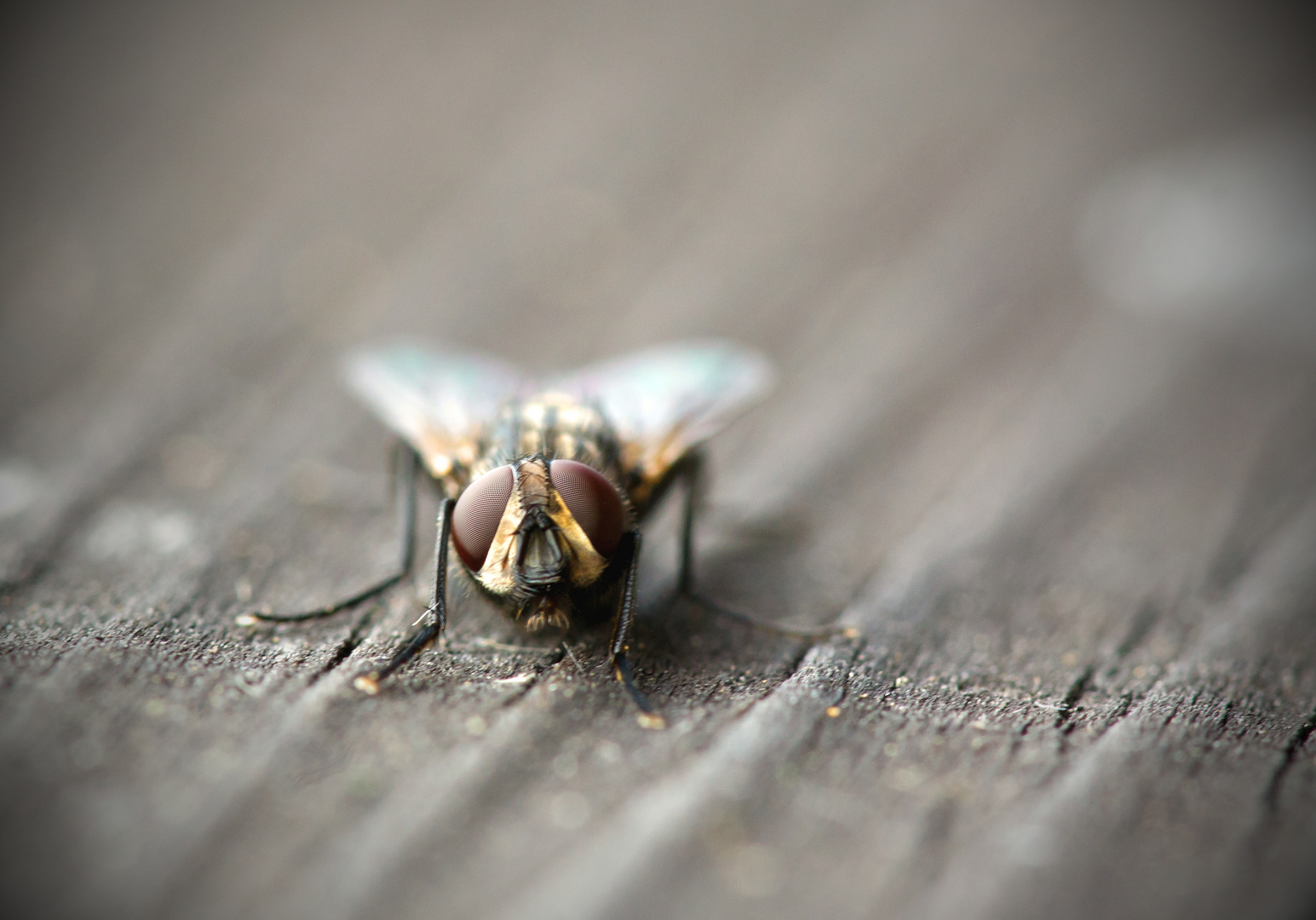 Fliege banal 2