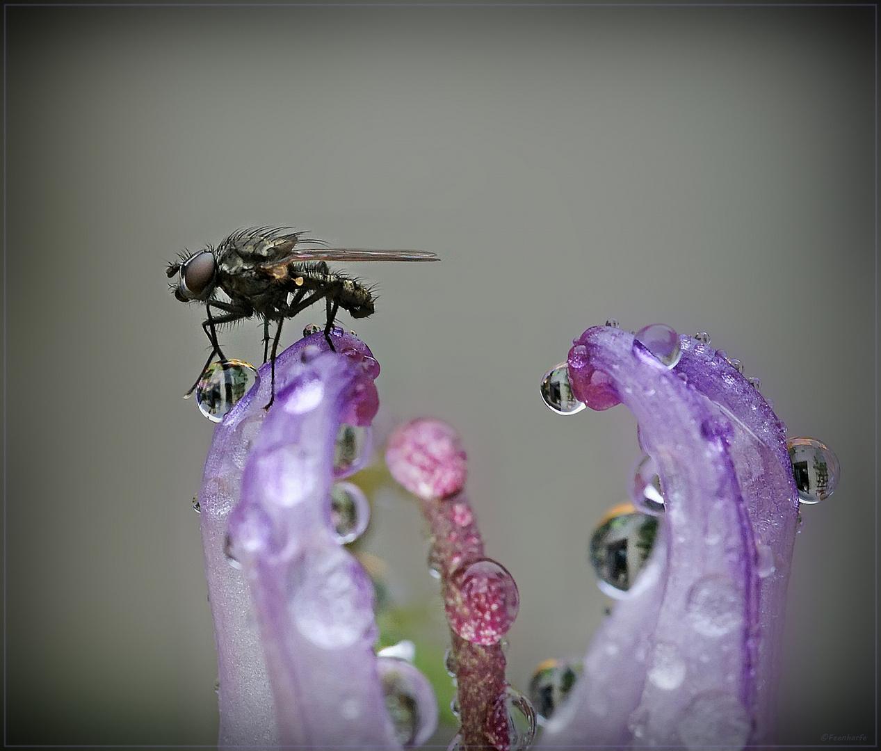 Fliege beim Gugeln erwischt...