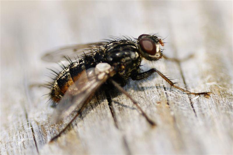 Fliege beim Sonnenbad