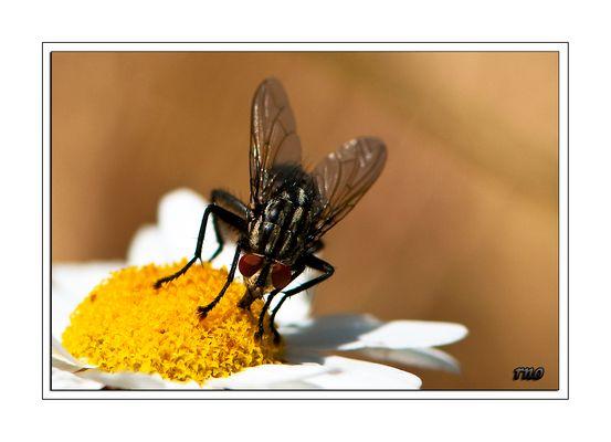 Fliege... bitte nicht stören