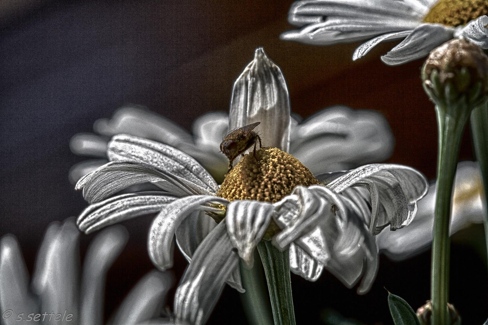 Fliege & Blume