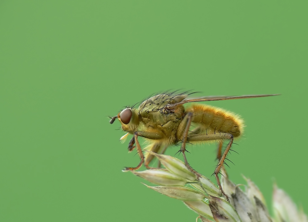 Fliege gelb :-)