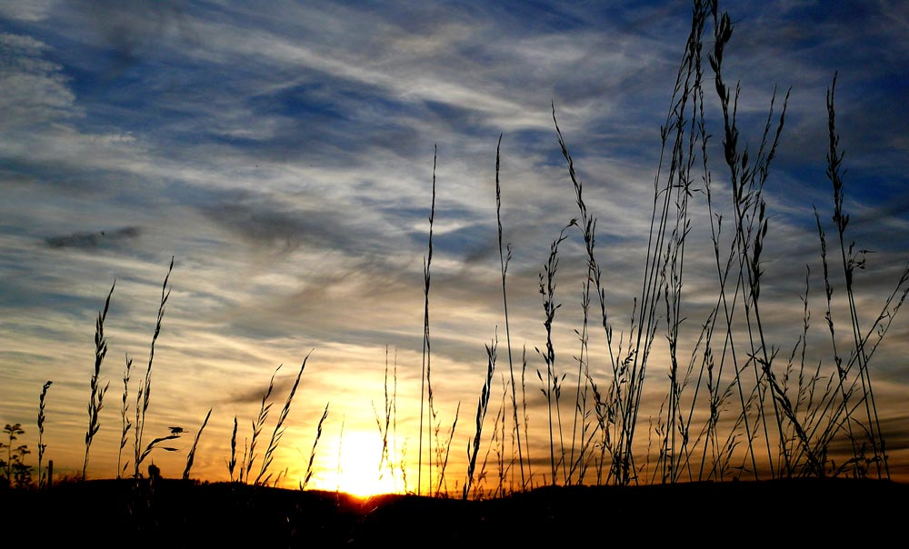 Fliege geniesst den Sonnenuntergang...