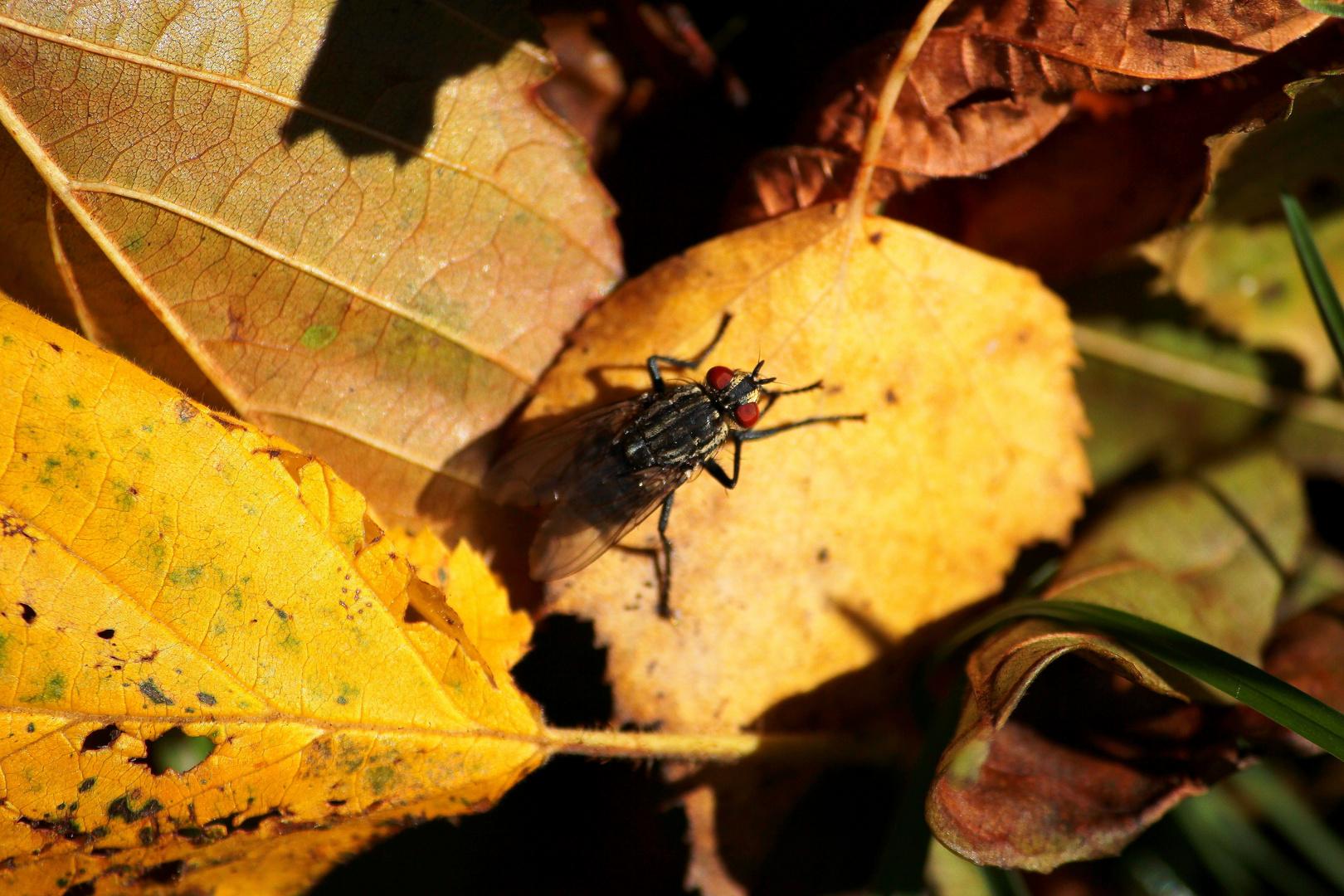Fliege genießt die Sonne im goldenen Oktober
