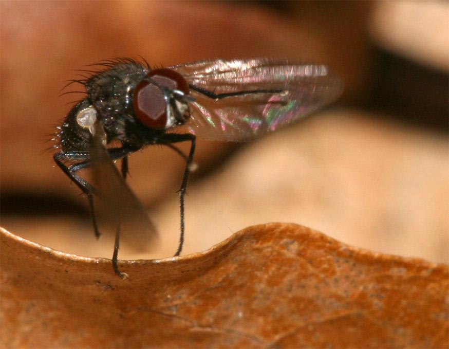 Fliege im Abflug