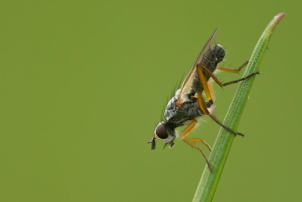 Fliege im Grünen