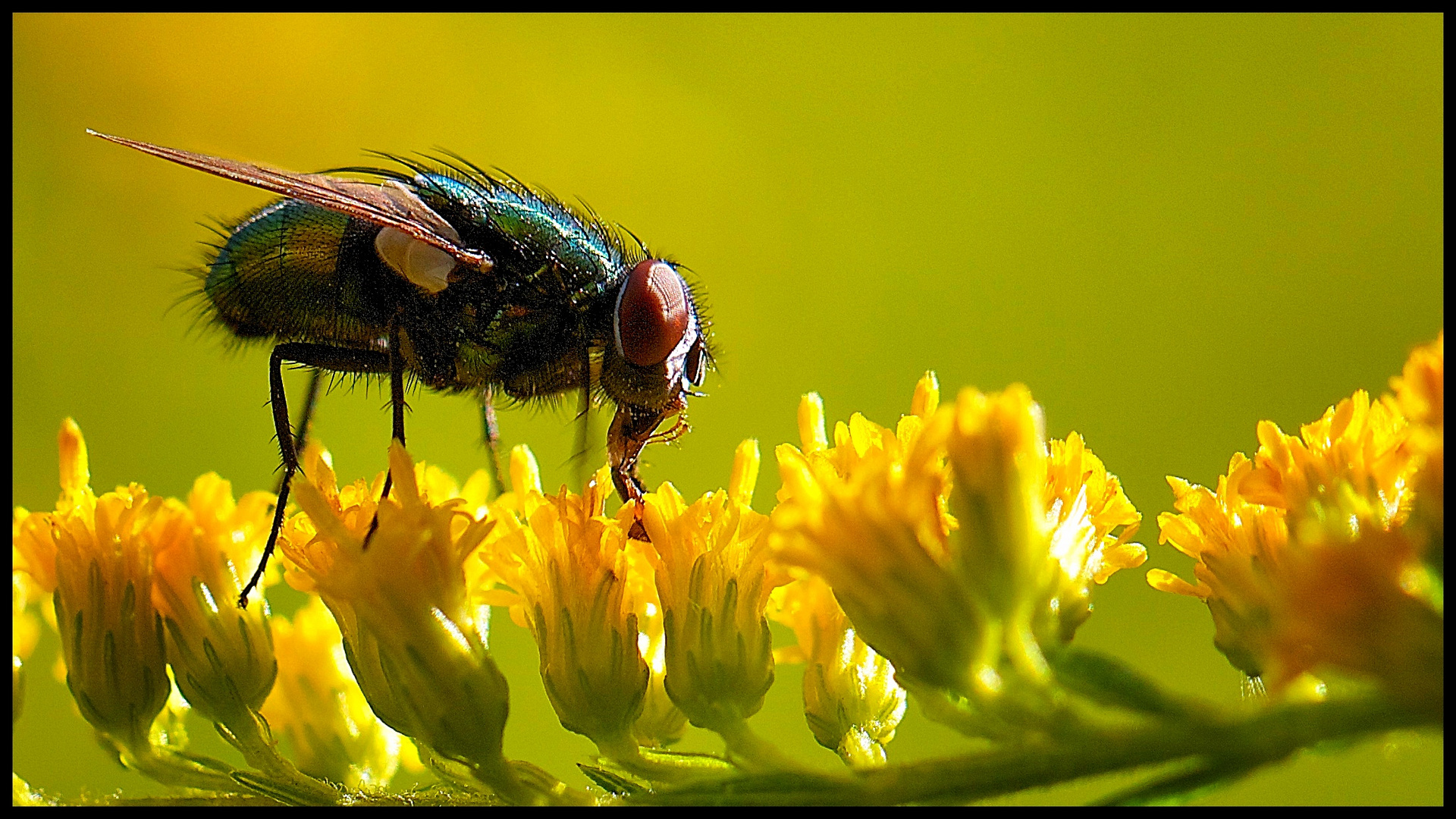 Fliege im Licht 2