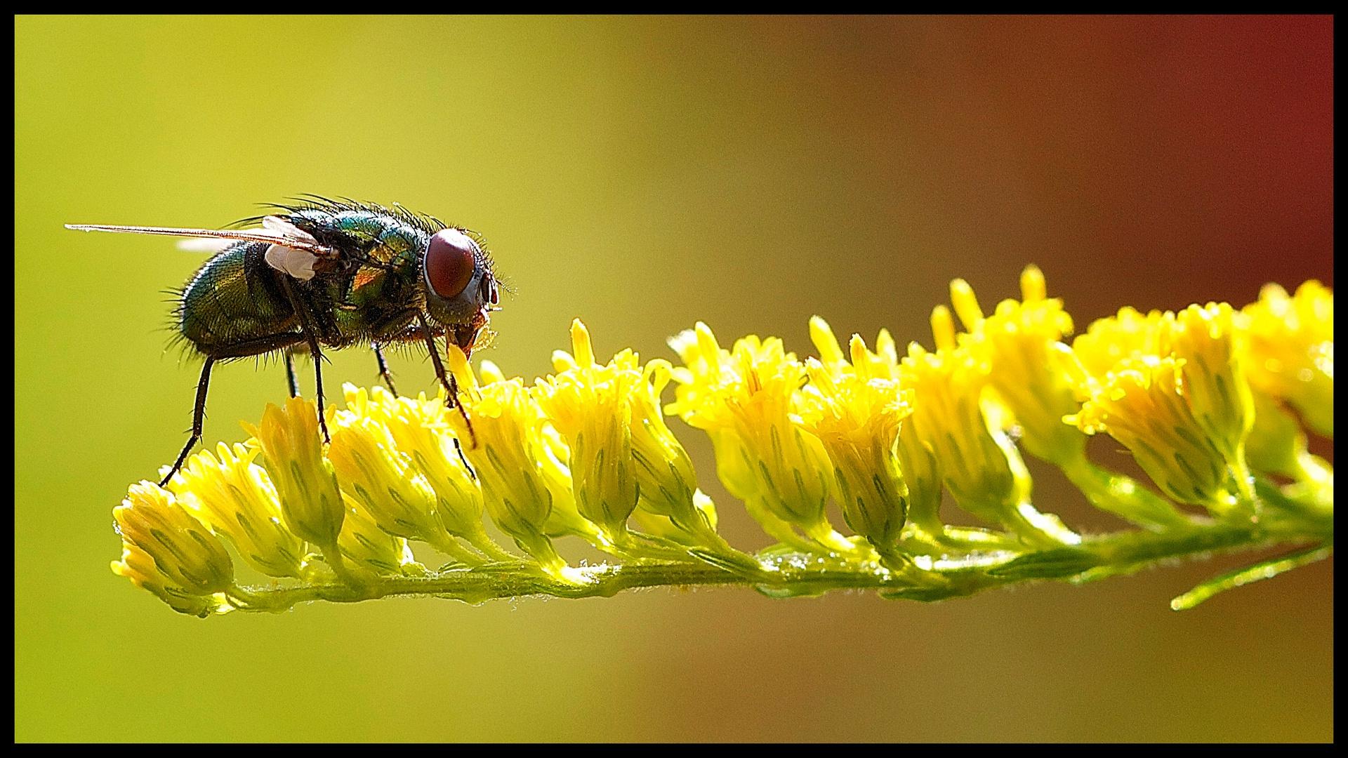 Fliege im Licht
