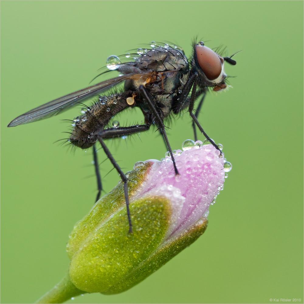Fliege im Quadrat