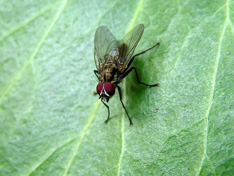 Fliege im Schatten