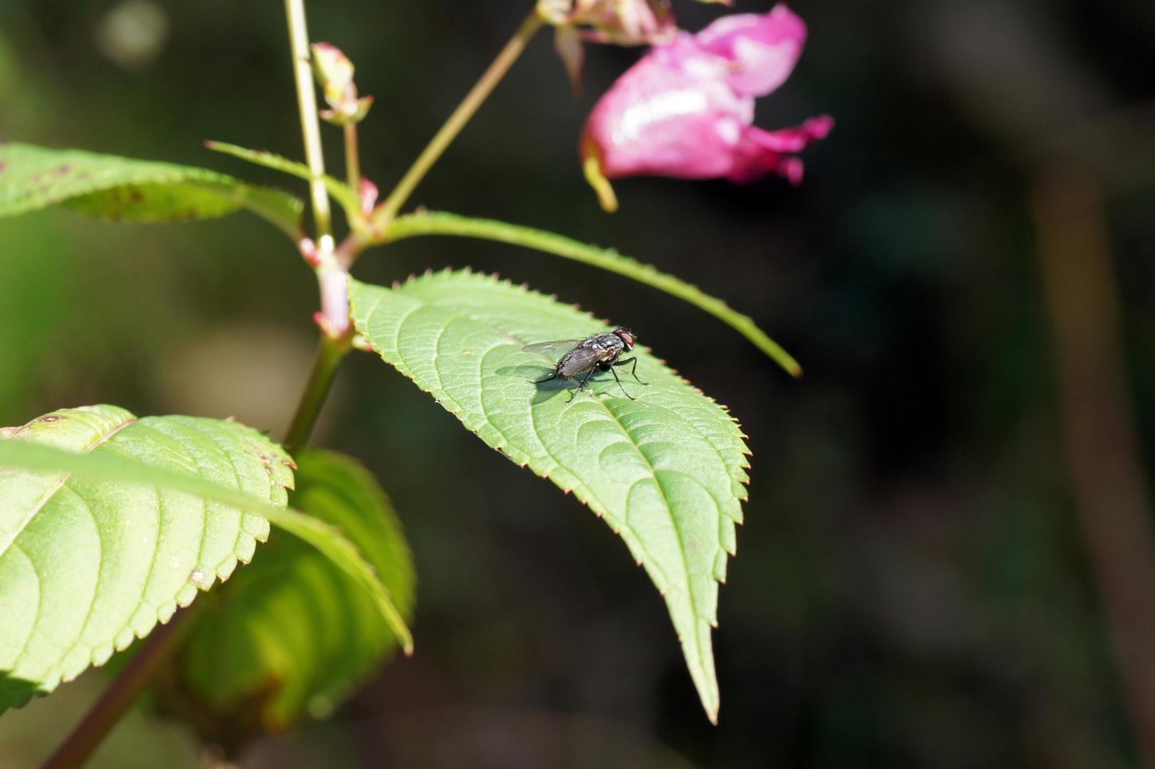 Fliege in der Sonne