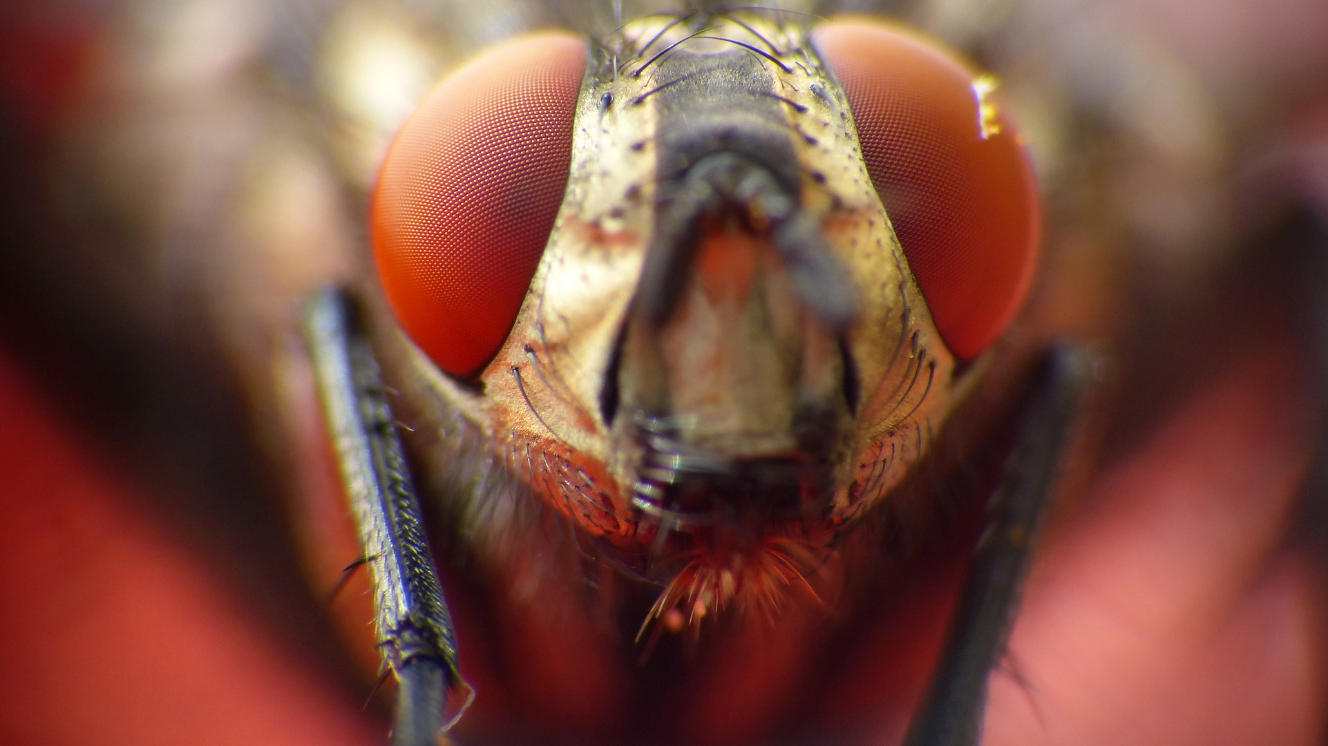 Fliege in groß