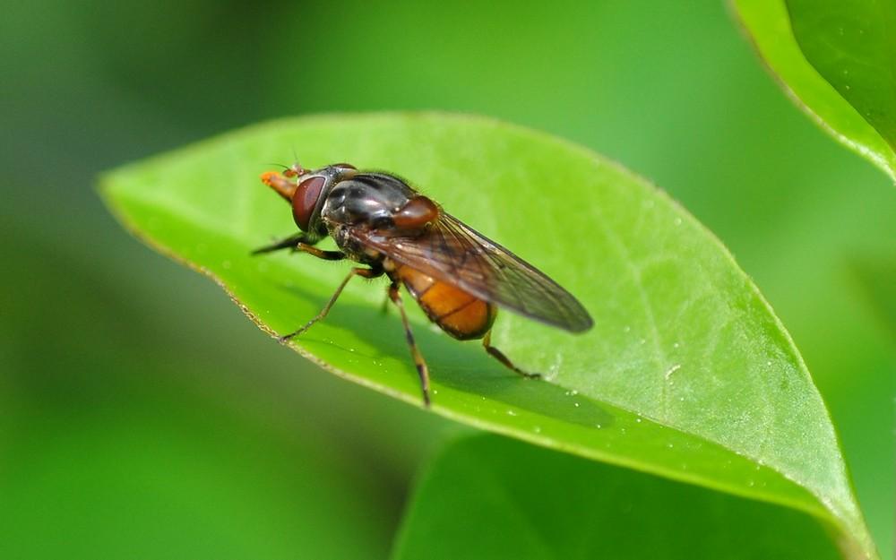 Fliege in Grün