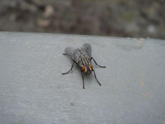 Fliege mal nah gesehen!