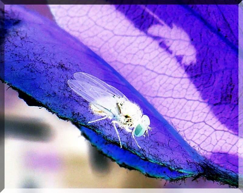 Fliege mit Schlagschatten 2