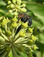 Fliege mit Sturzbügel