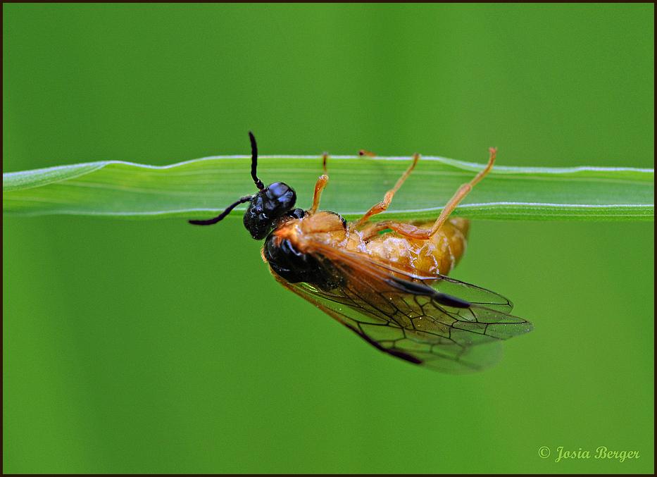 Fliege? (turne gerne)