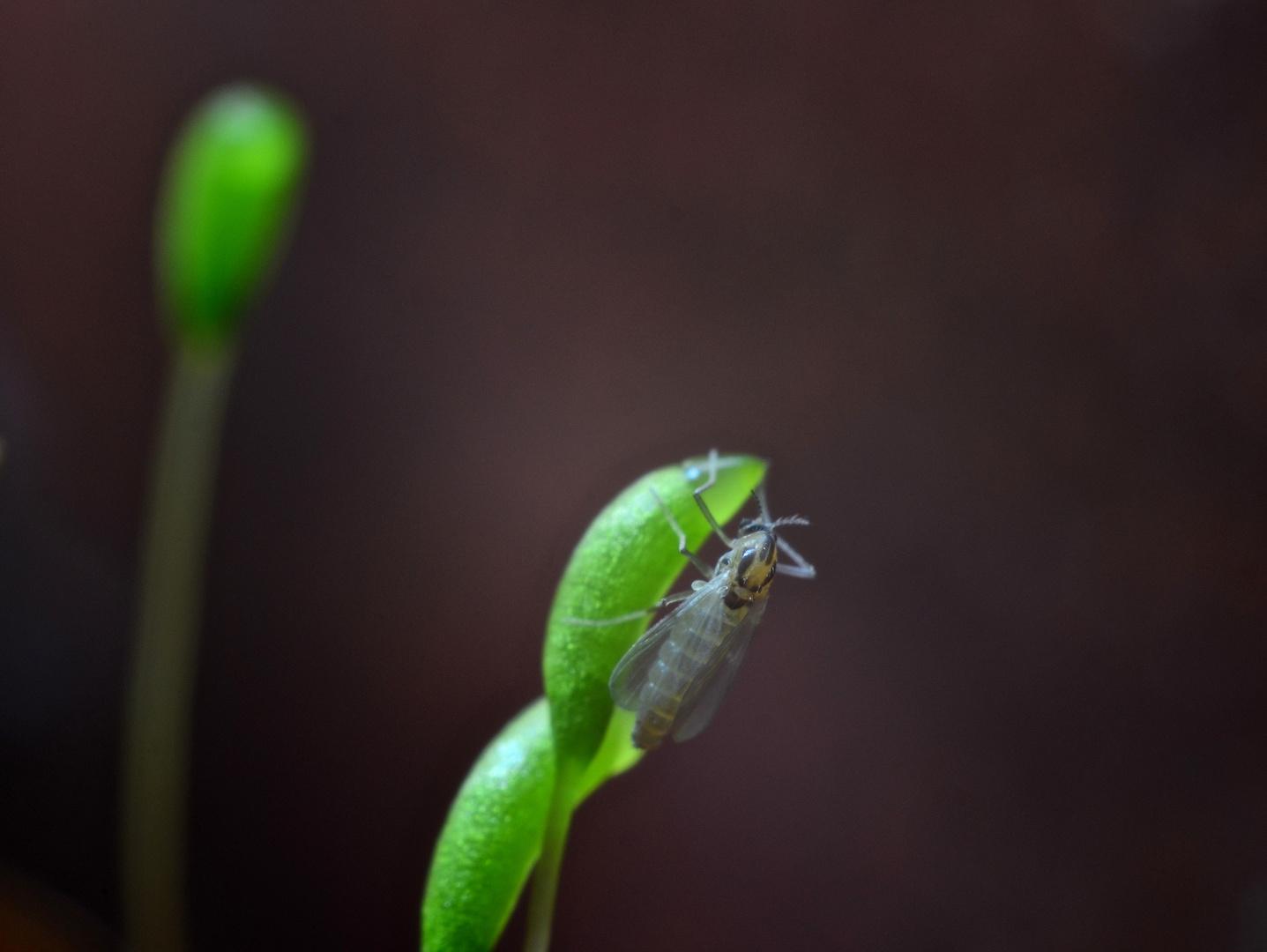 Fliege und Moos
