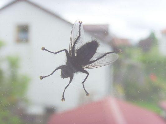 Fliege von unten